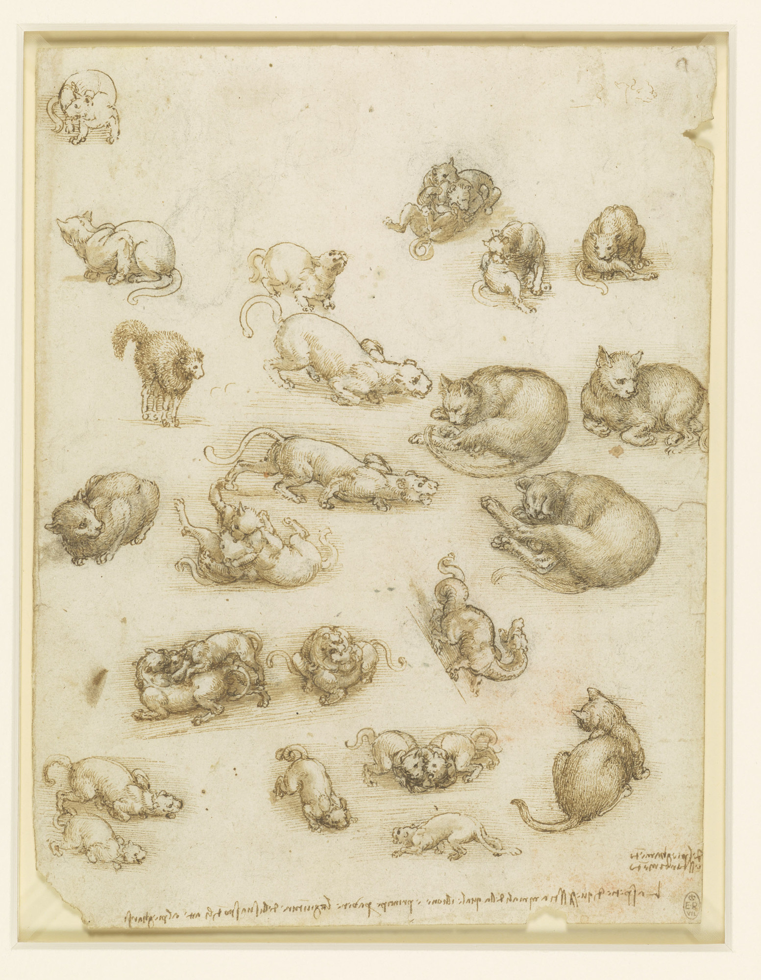 DaVinci's Cats and Dragon