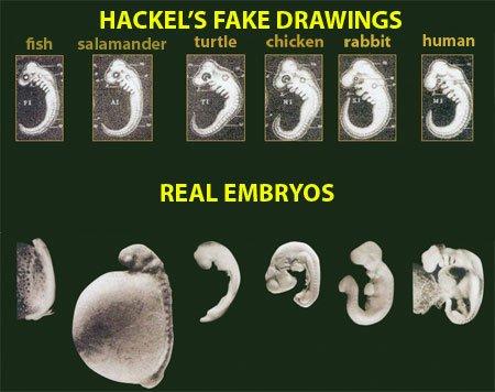 Hackel's Fake Drawings