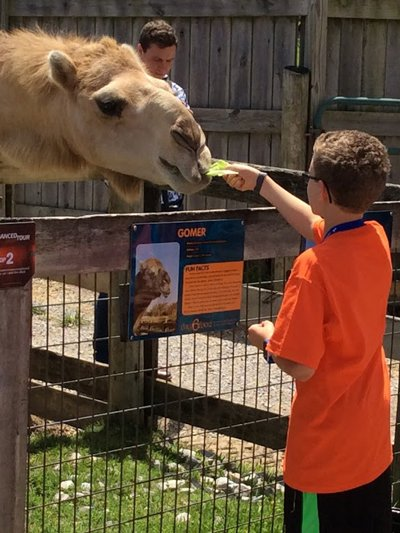 Camels at Explore Camp