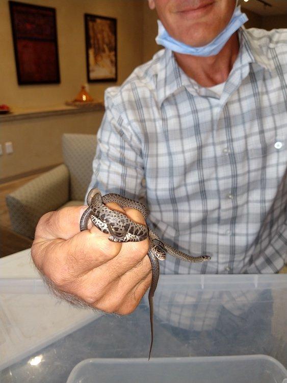 Snakes in Ken's Office