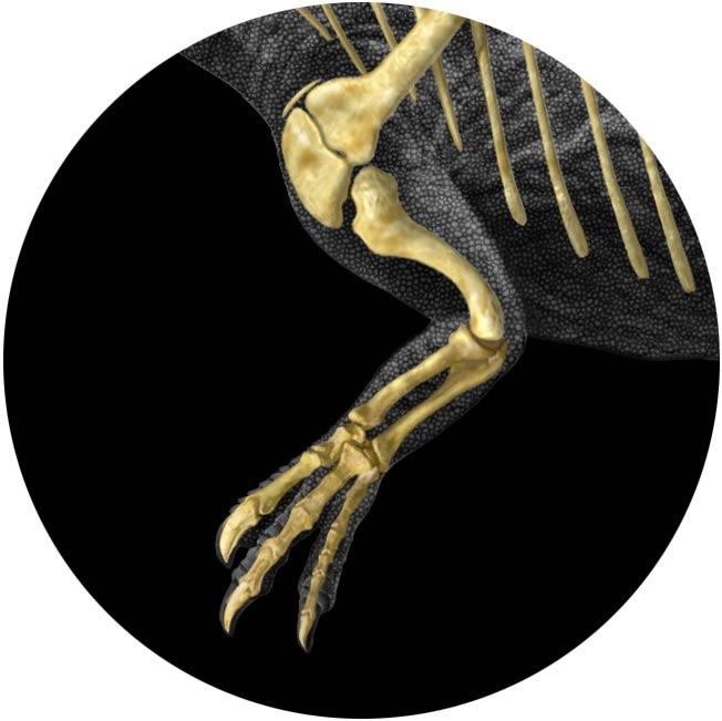 Allosaurous