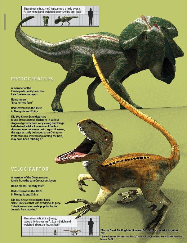 Protoceratops and Velociraptor
