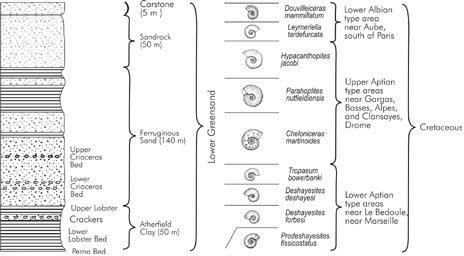 Thackray's representation of 15 millions years of ammonite evolution