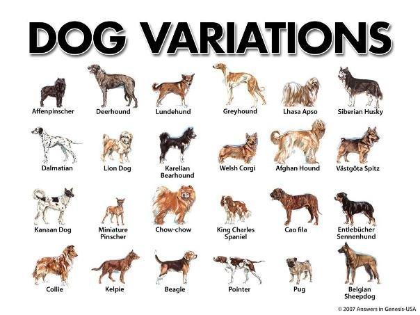 Dog Variations