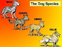 Original definition of species