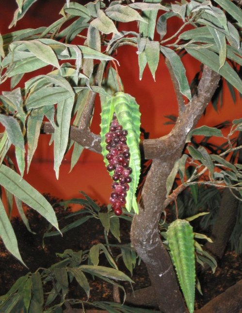 Forbidden fruit as show in the Creation Museum