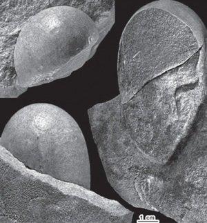Cretaceous eggs