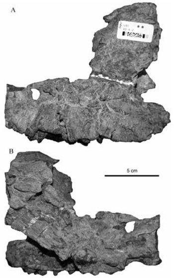 Pachysuchus