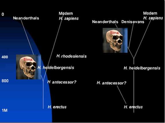 Human Evolution Story