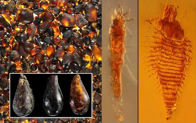 Insects in Amber