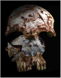 Tam Pa Ling skull