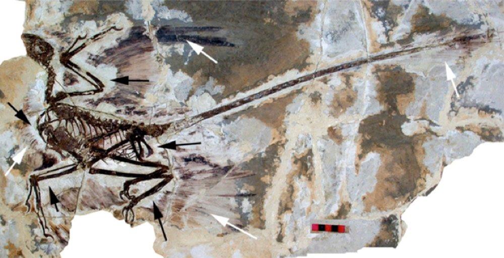 Microraptor gui