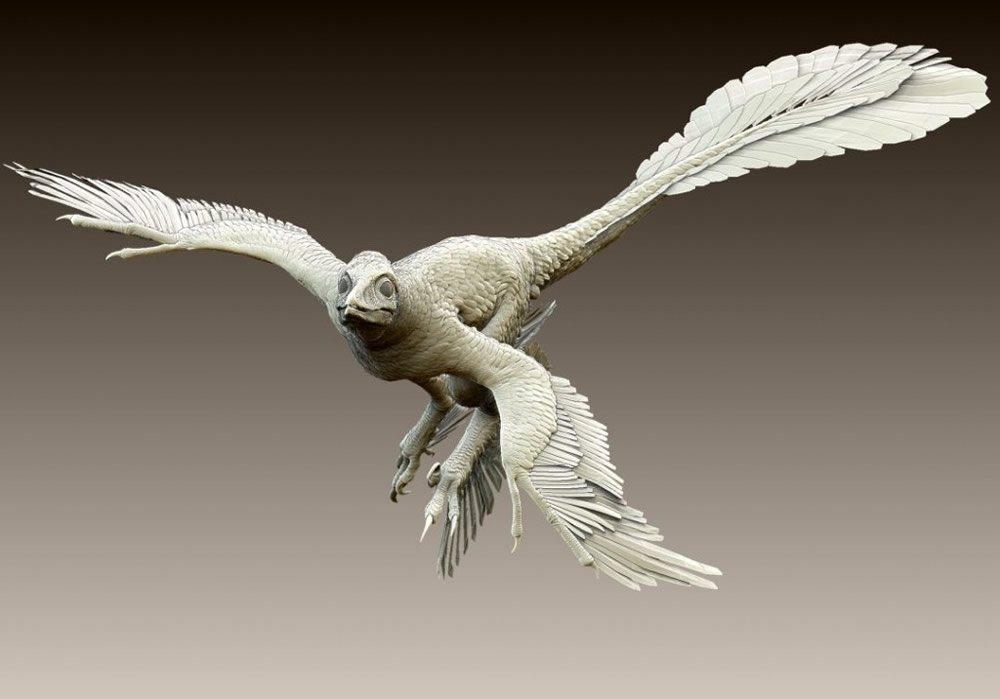Microraptor gui Model