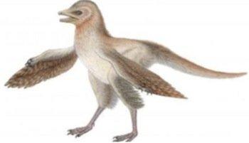 bird-fossil