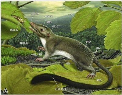 placental-ancestor