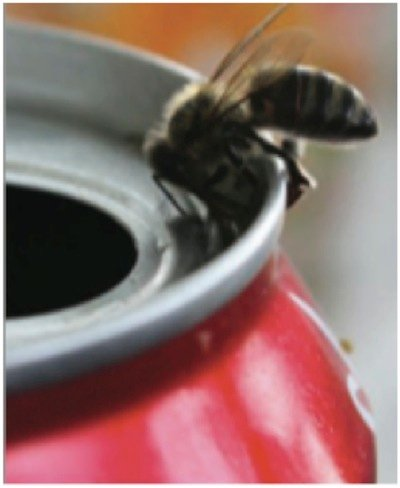bee-can