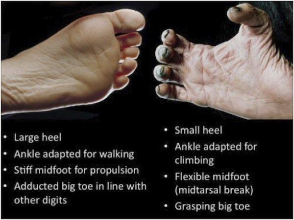 foot-comparison
