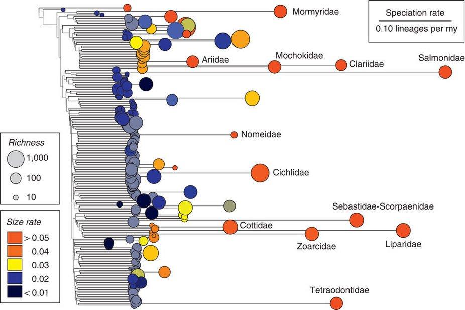 speciation-chart