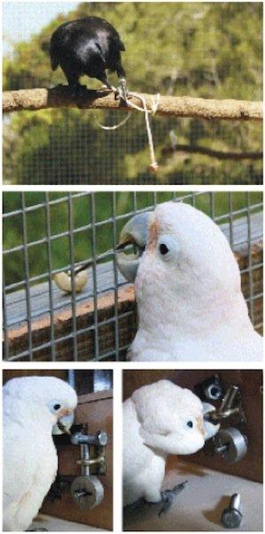 bird-tool