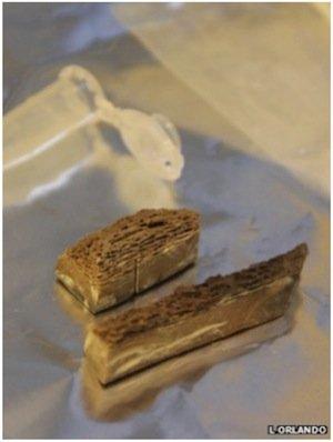 bone-DNA