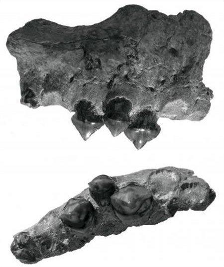 piranha-fossil
