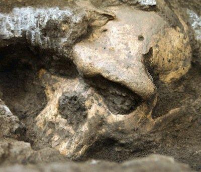 dmanisi-skull5