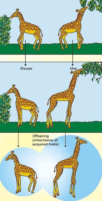 Lamarckism giraffes