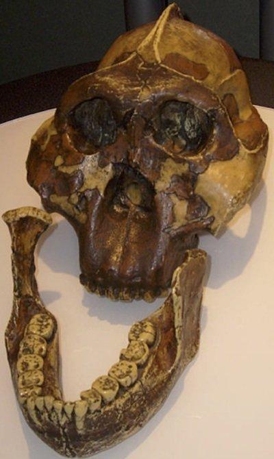 nutcracker skull