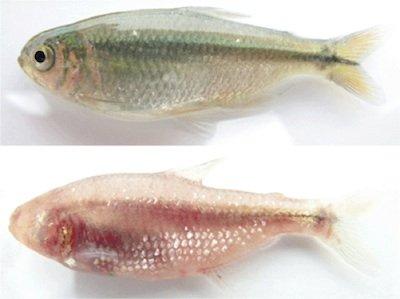 fish-fins
