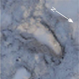Happisburgh footprint