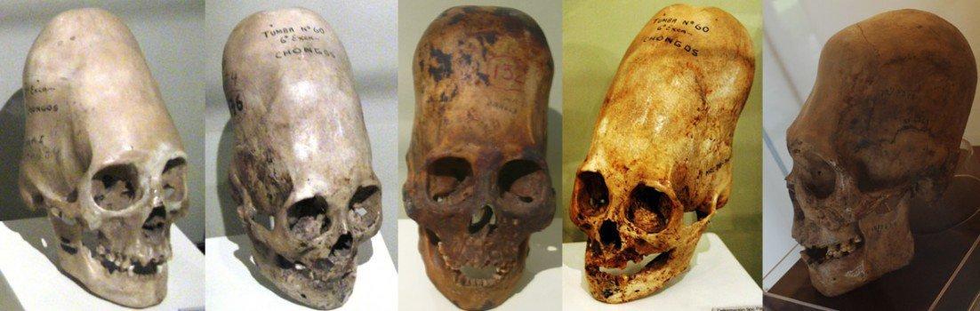 Skull Lineup