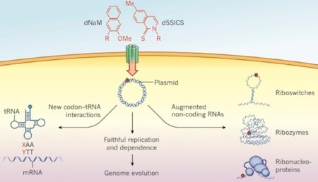 plasmid insertion