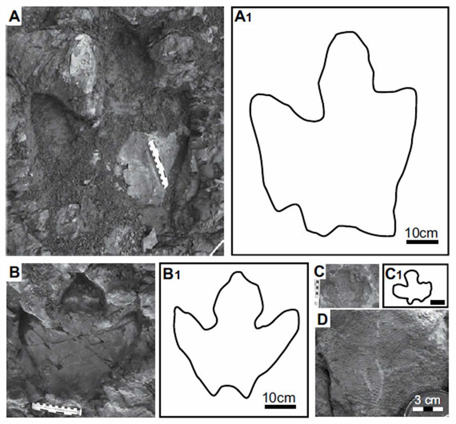 Hadrosaur tracks