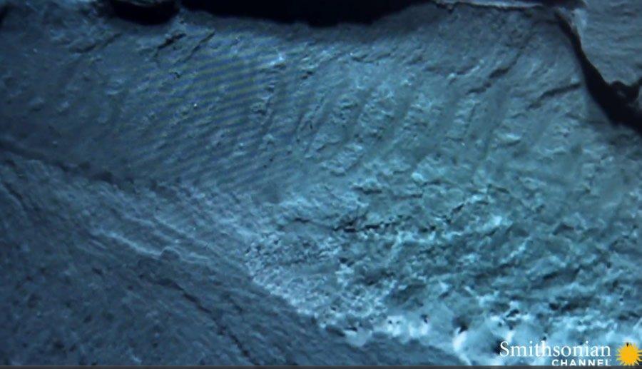 Myllokunmingia fossil