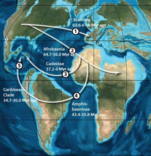 Worm Lizard Migration Map