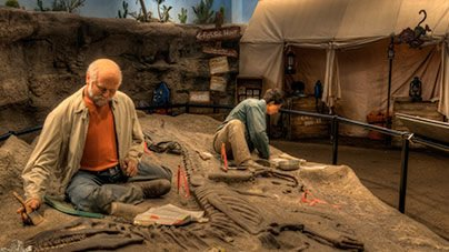 Creation Museum Dig Site