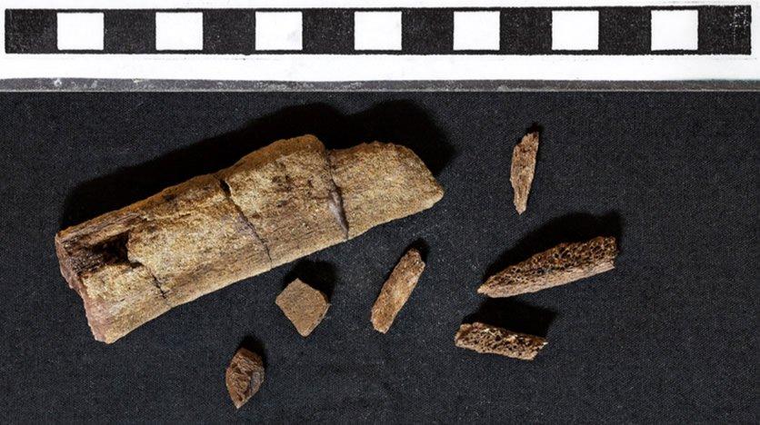 Cretaceous Fossil Dinosaur Rib