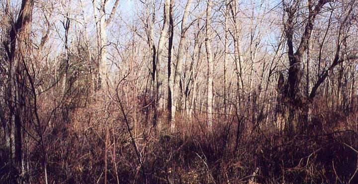 Mystick Woods
