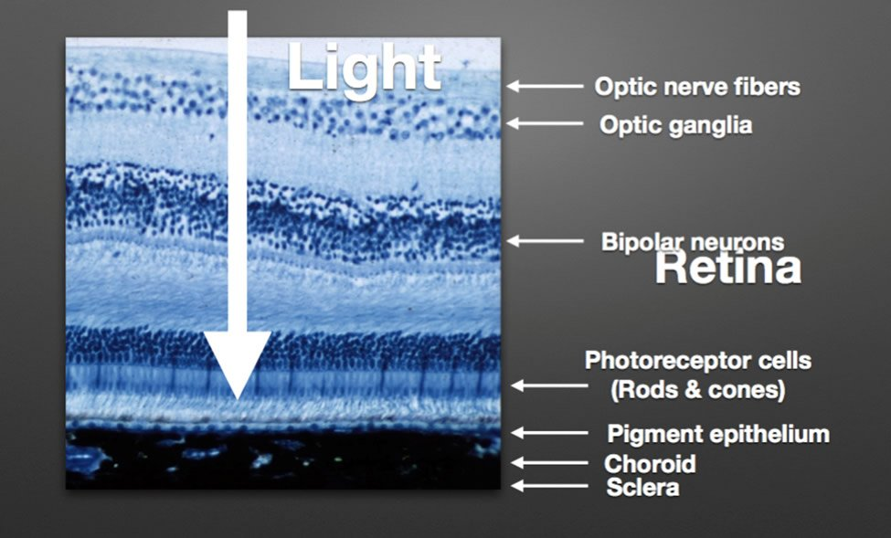 Retina Micrograph