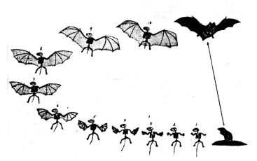 Bat Evolution