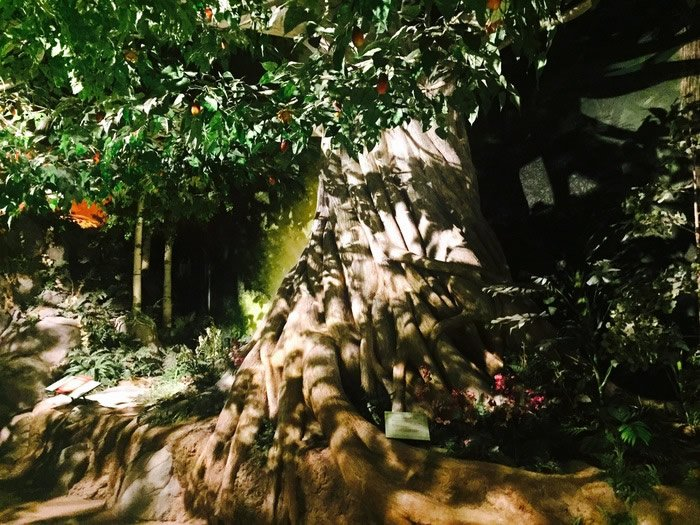 Tree of Life in the Creation Museum