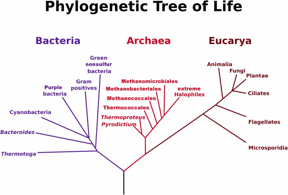 Phylogenetic Tree of Life
