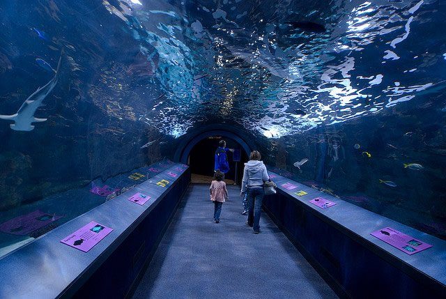 Newport Aquarium Tunnel