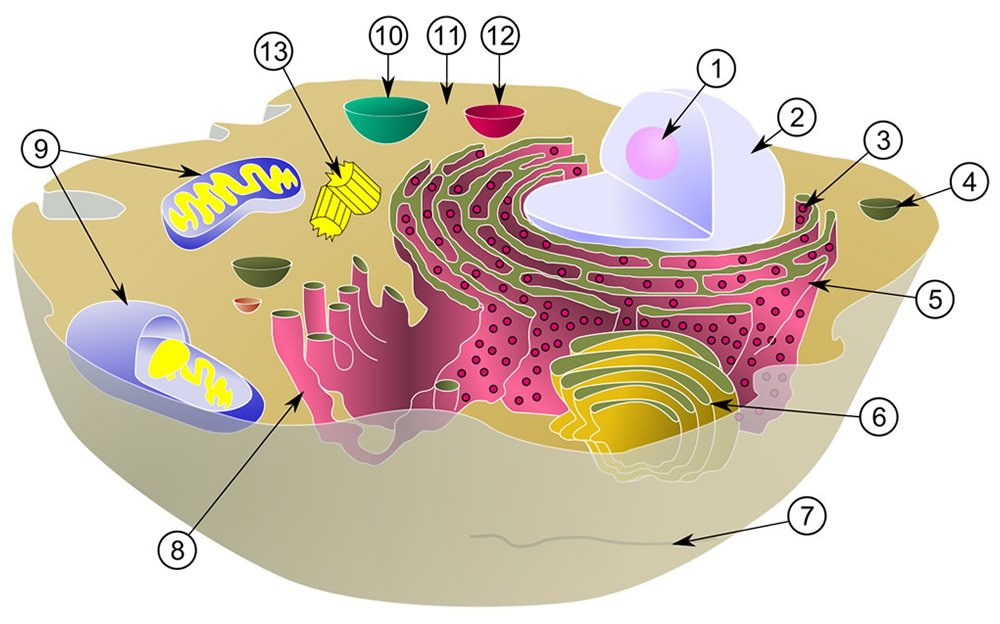 Biological Cell