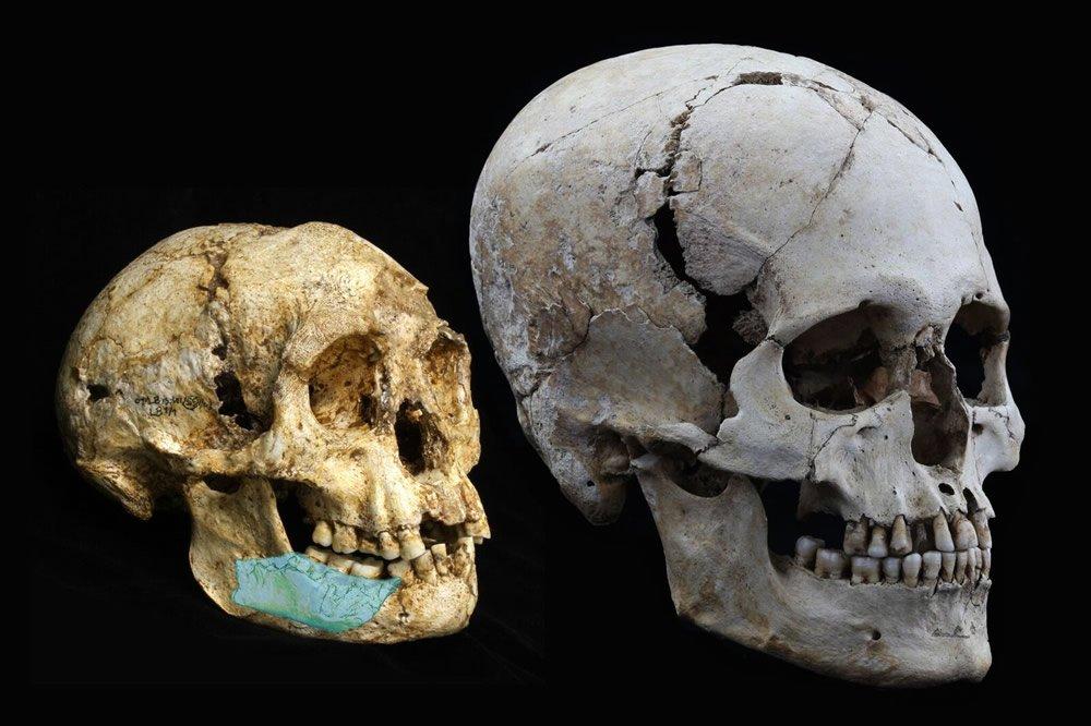 Comparison of Skulls