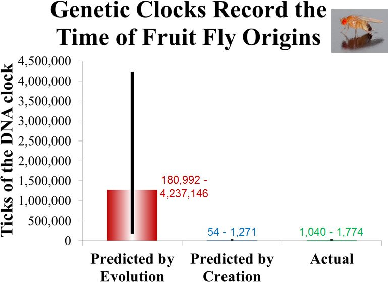 Genetic Clocks Record the Time of Fruit Fly Origins