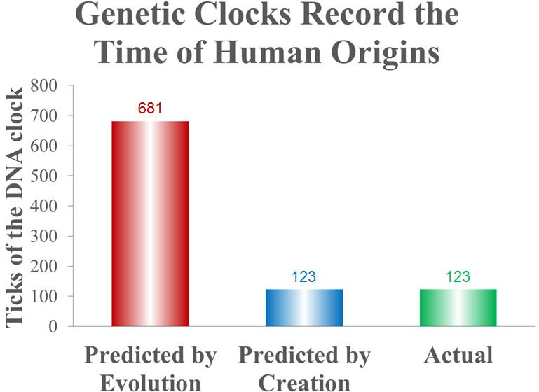 Genetic Clocks Record the Time of Human Origins