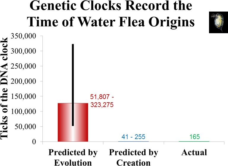 Genetic Clocks Record the Time of Water Flea Origins