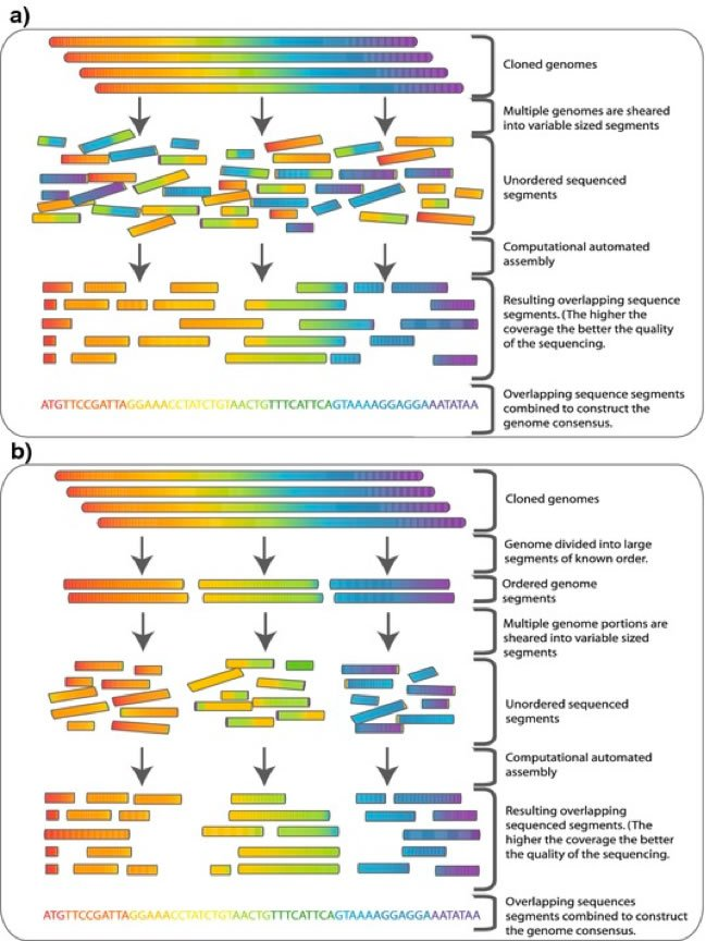 Sequencing Genomes