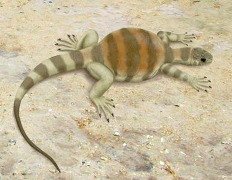 Eunotosaurus artwork